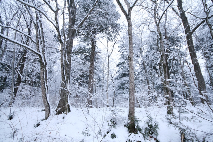 三月の雪景色_f0091207_0453222.jpg