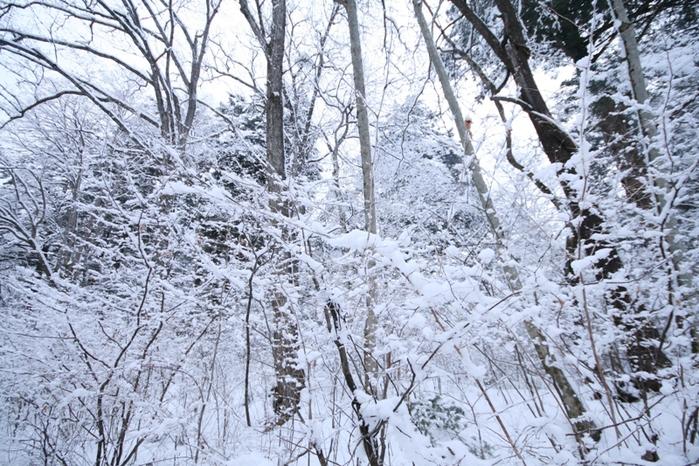 三月の雪景色_f0091207_045799.jpg