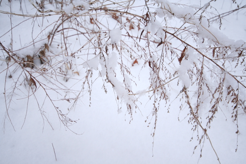 三月の雪景色_f0091207_0461578.jpg