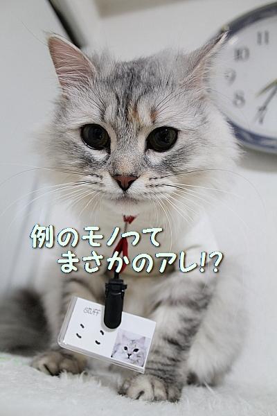 c0211109_4541085.jpg
