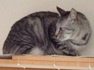 猫のお友だち ちぃちゃんあずきちゃんちょびくんまろくん編。_a0143140_2152019.jpg