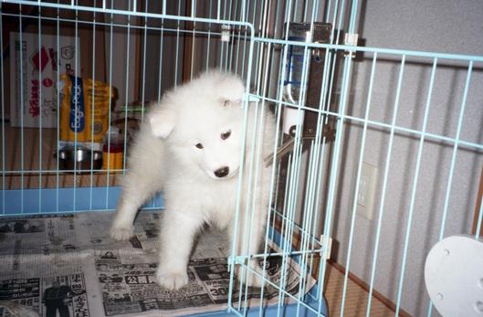 犬の映画 2題_f0128542_955992.jpg