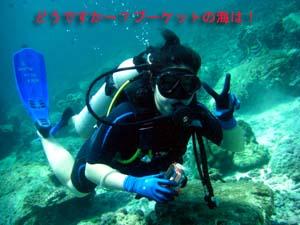 サンゴを病院に連れて行ってあげて♪_f0144385_21403617.jpg