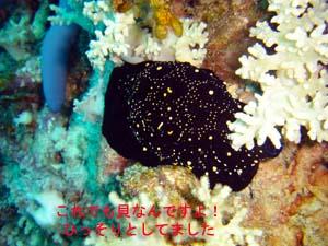 サンゴを病院に連れて行ってあげて♪_f0144385_2140741.jpg