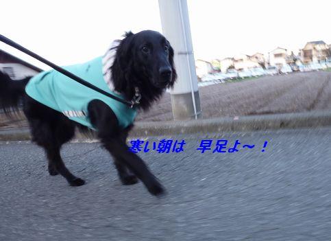 c0097309_9194361.jpg