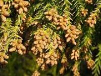 アロマで花粉対策_c0007919_895715.jpg