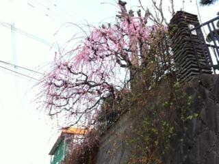 季節を感じる風景_c0217853_10281843.jpg