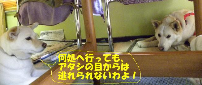 b0201756_2341997.jpg