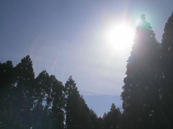 杉林に囲まれて・・・_a0174458_17452586.jpg