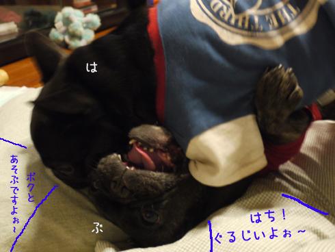 b0134197_20162072.jpg