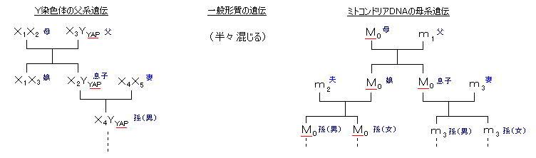 人類の「Y染色体」ハプログループ分布と「シッチンの人類創世説」に矛盾があるか?_e0171614_1204081.jpg