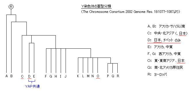 人類の「Y染色体」ハプログループ分布と「シッチンの人類創世説」に矛盾があるか?_e0171614_1221992.jpg