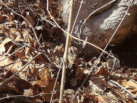 巣穴からでてきたシマリス と クルピコ尻尾のらもす_e0147716_7112930.jpg
