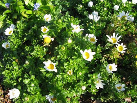 三月の庭_f0129726_22313573.jpg