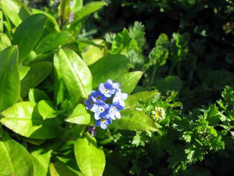 三月の庭_f0129726_2233891.jpg