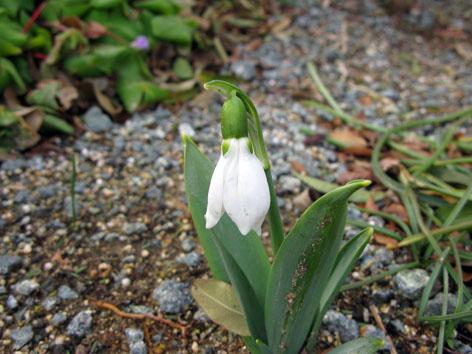 三月の庭_f0129726_22351930.jpg