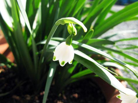 三月の庭_f0129726_22374074.jpg