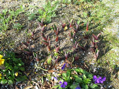 三月の庭_f0129726_22385360.jpg