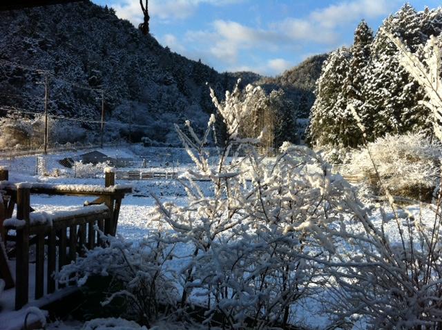 今朝の大原今日も雪_e0074935_1714729.jpg