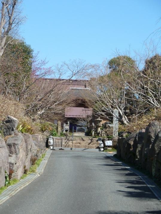 常泉寺のミツマタも春を待っています☆_c0152341_9303699.jpg