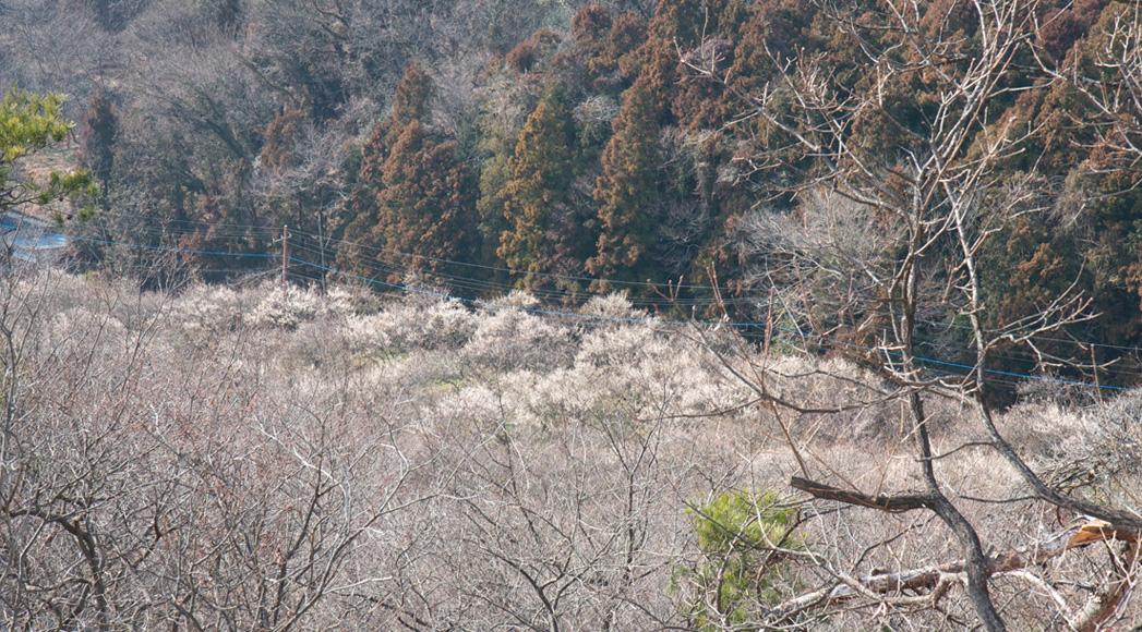 足利 蕎遊庵〜織姫山〜西渓園_e0127948_14115027.jpg