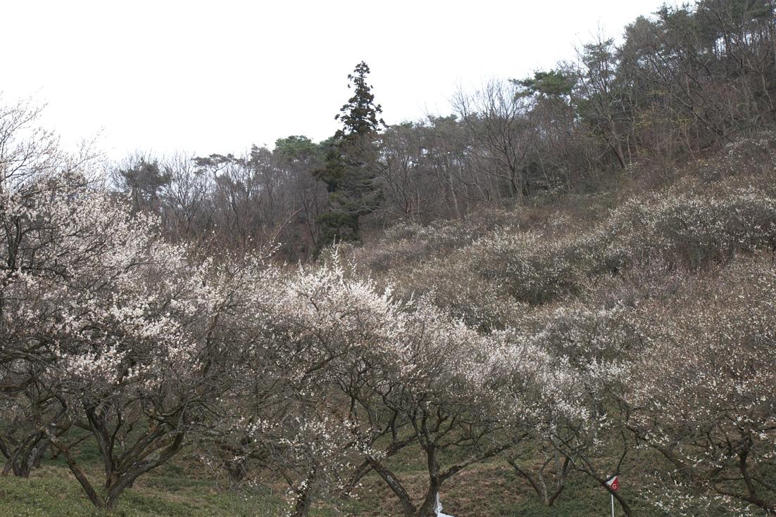 足利 蕎遊庵〜織姫山〜西渓園_e0127948_1416660.jpg