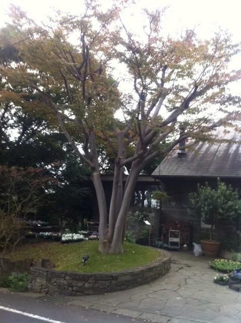 2011-03-10 4月は駒場東大前で「ONGAKUゼミナール」_e0021965_1025943.jpg