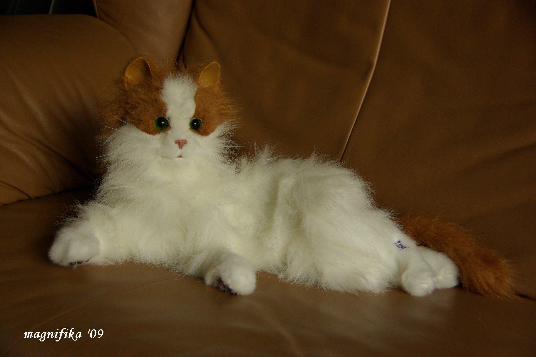 夢猫 Dream Cat_e0140365_20343526.jpg