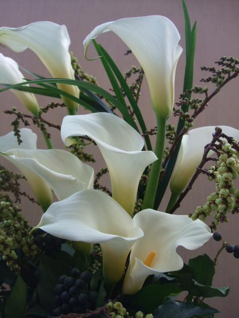 オークリーフ(木藤とアイビーベリーとカラー・白妙のアレンジメント)_f0049672_110586.jpg