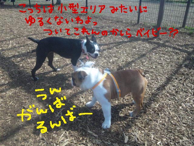 日曜の舎人ラン★ヨダレ女とよろしくベイビー♪♪_d0187891_8363331.jpg