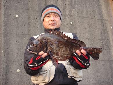 ★今年の初物黒鯛ゲッチュウー☆_e0147297_19101375.jpg