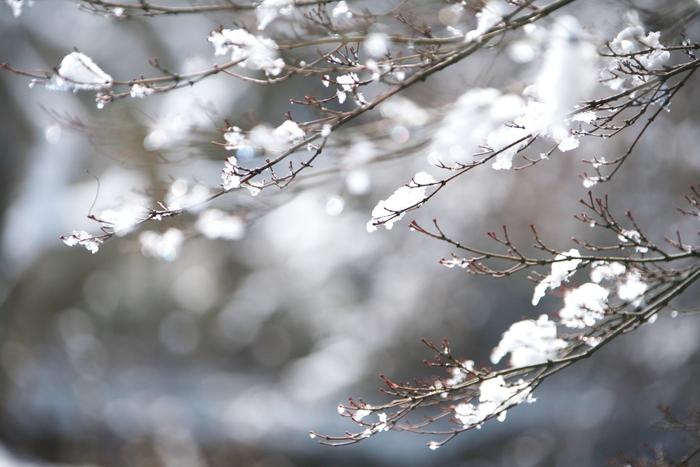 雪融け_f0091207_23525280.jpg