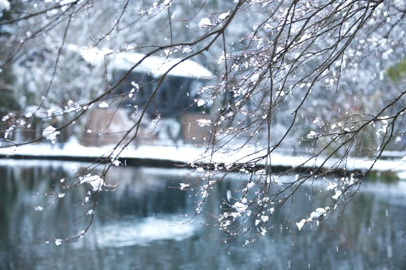 雪融け_f0091207_23583579.jpg