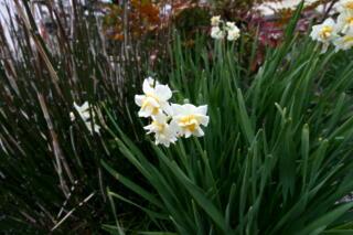 春がすぐそこまで_c0170415_1435582.jpg