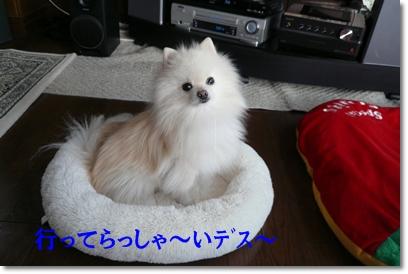 b0167519_912967.jpg