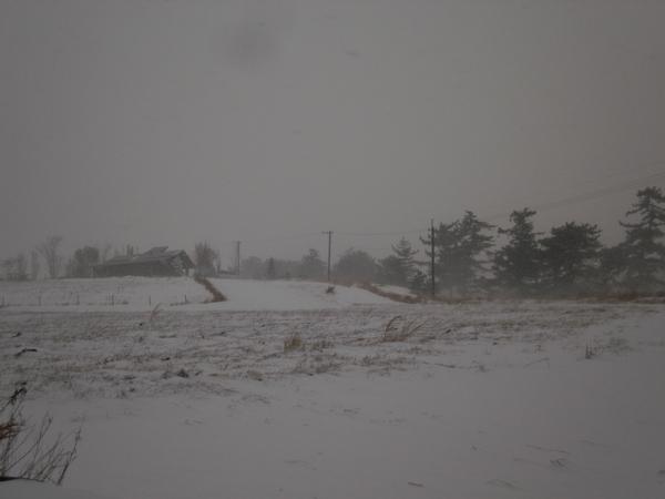 雪の日の久住高原~無事脱出_a0174458_10391197.jpg
