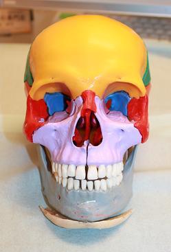 下顎骨スティック骨切り2件 、 脂肪移植豊胸1件 _d0092965_0412069.jpg