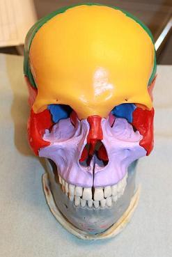 下顎骨スティック骨切り2件 、 脂肪移植豊胸1件 _d0092965_0543224.jpg
