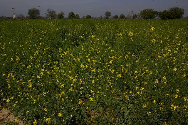 インド滞在記2011 その4: India 2011 Part4_a0186568_1048172.jpg