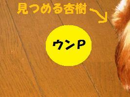 d0140668_15503746.jpg