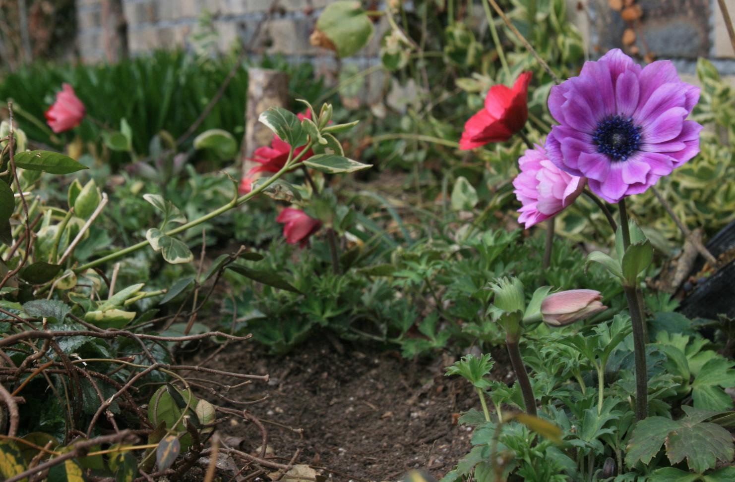 横山園芸 – Organic Flower Japan | オーガニックフ …