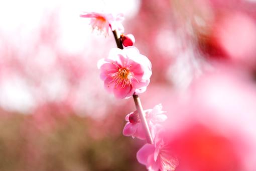 春風_f0171001_1614325.jpg