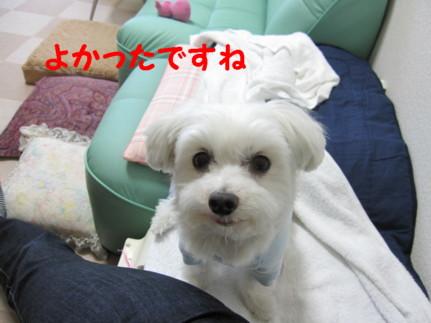 b0193480_11512444.jpg