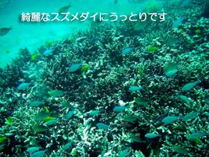 大興奮の体験ダイビング★_f0144385_17342096.jpg
