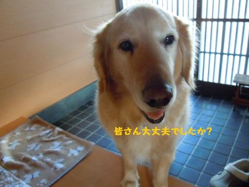 東日本巨大地震!_f0114128_19243888.jpg