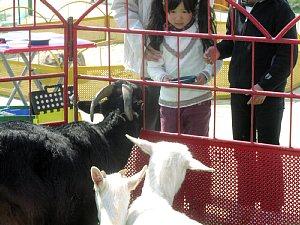 大人気!『ふれあい動物園』_c0141652_17252345.jpg