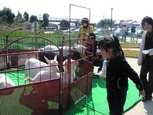 大人気!『ふれあい動物園』_c0141652_17255134.jpg