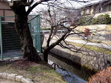 世界遺産・京都銀閣寺4._d0136282_13491480.jpg