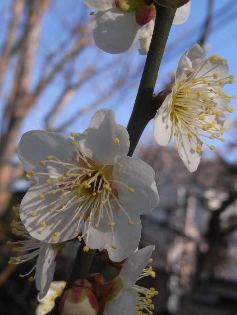 春にむけて~家のお花(其の三)_e0152493_22105488.jpg