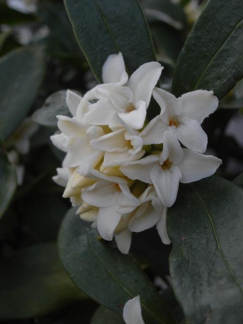 春にむけて~家のお花(其の三)_e0152493_22141218.jpg